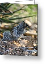 Canyon Squirrel Greeting Card