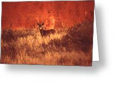 Canyonland Mule Deer Greeting Card by T C Brown