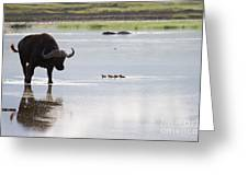 Cape Buffalo And Baby Eygptian Geese   #0375 Greeting Card