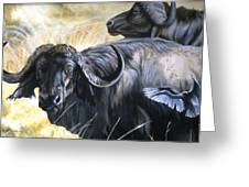 Da206 Cape Buffalo By Daniel Adams Greeting Card
