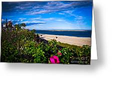 Cape Cod Beach Greeting Card