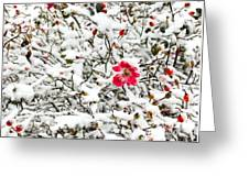 Cape Cod Beach Rose In Fresh Snow Greeting Card