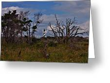 Cape Hatteras Lighthouse 1 8/20 Greeting Card