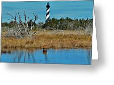 Cape Hatteras Lighthouse Deer In Pond 1 3/01 Greeting Card