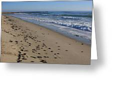 Cape Hatteras - Mermaid's Purse Laiden Beach Greeting Card