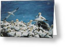 Cape St. Mary Ecological Resrve Greeting Card