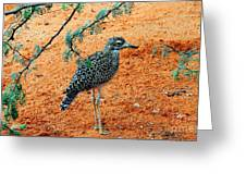 Cape Thick-knee Greeting Card