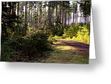 Capitol Forest Logging Road Greeting Card