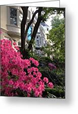 Capitol Hill Azaleas Greeting Card