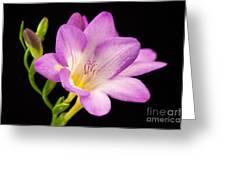 Captivating Greeting Card