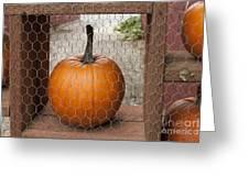 Captive Pumpkins Greeting Card