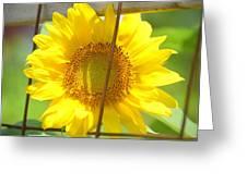 Captured Greeting Card