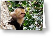 Capuchin Monkey Greeting Card