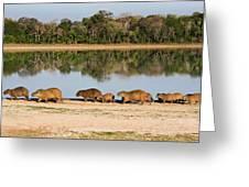 Capybara By A Lake Greeting Card