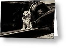 Car And Dog Greeting Card