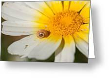 Caracolillo Greeting Card
