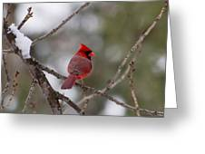 Cardinal - A Winter Bird Greeting Card