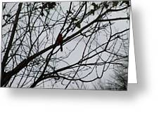 Cardinal Amongst The Branches Greeting Card