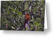 Cardinal At Dawn Greeting Card
