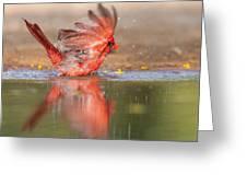 Cardinal Bath 4 Greeting Card