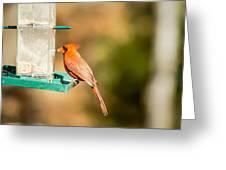 Cardinal Bird At Bird-feeder Greeting Card