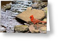 Cardinal By The Creek Greeting Card