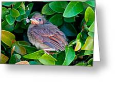 Cardinal Chick Greeting Card