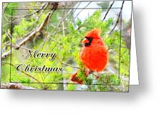 Cardinal Christas Card Greeting Card