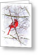 Cardinal Christmas-2014 Greeting Card