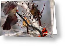 Cardinal Colony Greeting Card