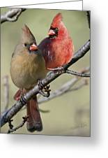 Cardinal Couple Greeting Card
