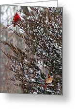 Cardinal Couple In Evergreen Greeting Card