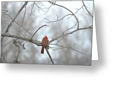 Cardinal Delight Greeting Card