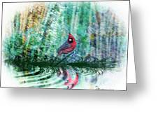 Cardinal - Featured In Comfortable Art-wildlife-and Nature Wildlife Groups Greeting Card