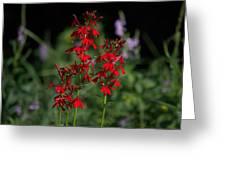 Cardinal Flowers Greeting Card