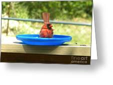 Cardinal Frisbee Greeting Card
