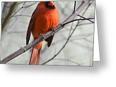 Cardinal In A Tree Greeting Card by Susan Leggett