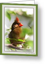 Cardinal In Dogwood Greeting Card