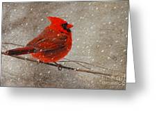 Cardinal In Snow Greeting Card