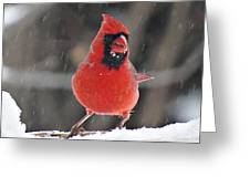 Cardinal In Snowstorm Greeting Card