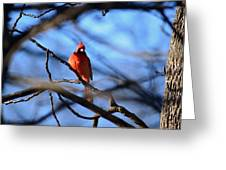 Cardinal In The Midst Greeting Card
