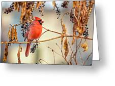 Cardinal In The Pokeberries Greeting Card