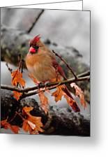 Cardinal In The Rain Greeting Card