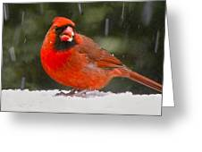 Cardinal In The Snowstorm Greeting Card