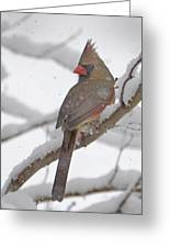 Cardinal In Winter Greeting Card