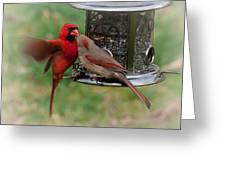 Cardinal Kiss Greeting Card