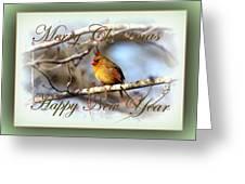 Cardinal - Lady At Christmas Greeting Card