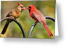 Cardinal Love Greeting Card