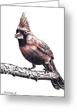 Cardinal Male Greeting Card