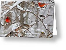 Cardinal Meeting In The Snow Greeting Card
